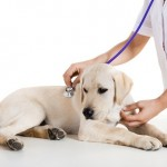 12 Dog Emergencies That Need Immediate Veterinary Attention