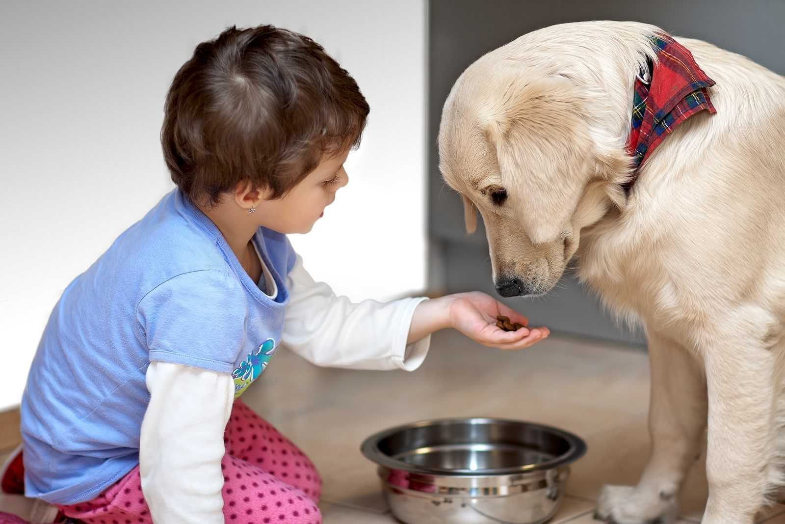 a look at challenges in taking care of pets Care of the paraplegic or quadraplegic dog with spinal problems requires commitmen and education if the dog is too big for one person to move, you'll need help getting the dog to the vet can be a.