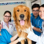 Vets and a Dog