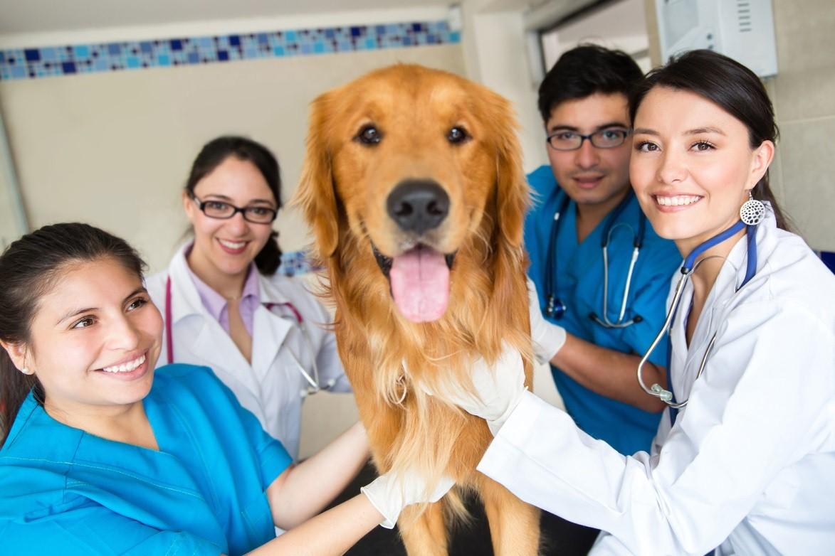 veterinary technician degree
