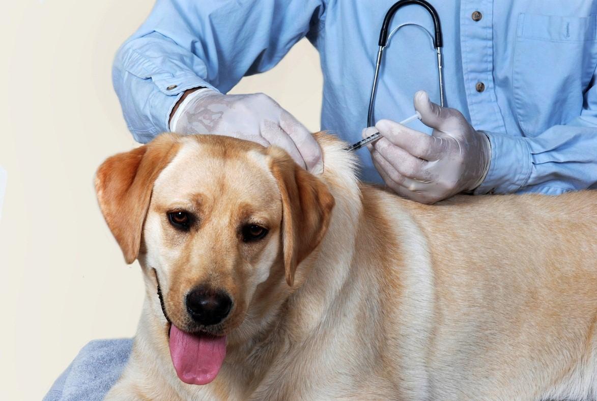 Dog Vaccine