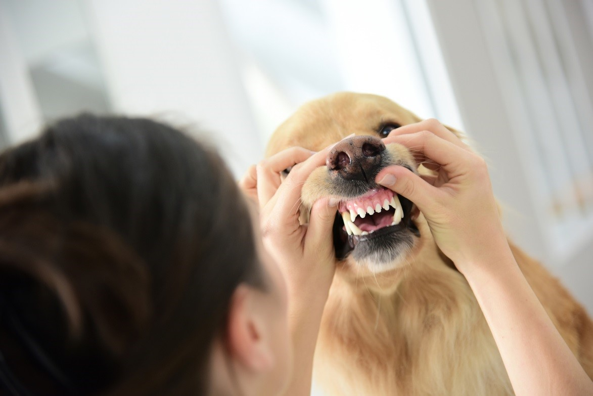 vets in croydon  gain a better understanding of the canine