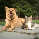 avoid obesity in dogs and cats