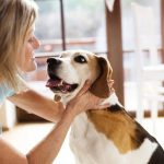 danger of canine distemper