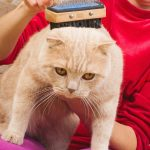 feline health problems