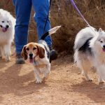 3 Essential Travel Tips for Your Pets