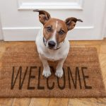 Tips for Leaving Your Dog Home Alone