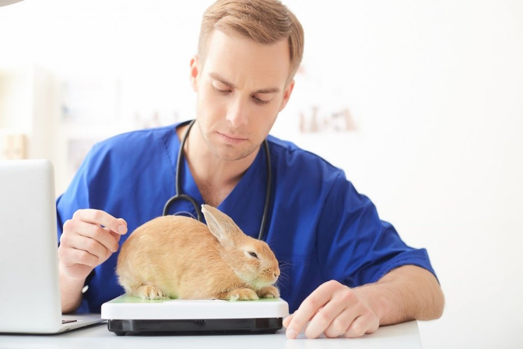 Signs that Your Rabbit is not Feeling Well