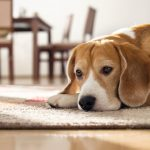 Vets in Surrey: 3 Quick Tips to Help Your Dog Avoid Issues with Worms