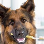 Good Dental Hygiene for Canines